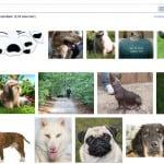 Google Billedsøgning Forbedret Til Det Perfekte